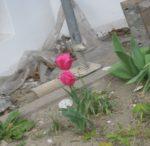 II. Welcome to Pink City von Tobias Steinfeld (Hausbesuch in Erkelenz)